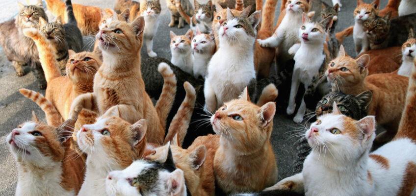 aoshima l'isola dei gatti